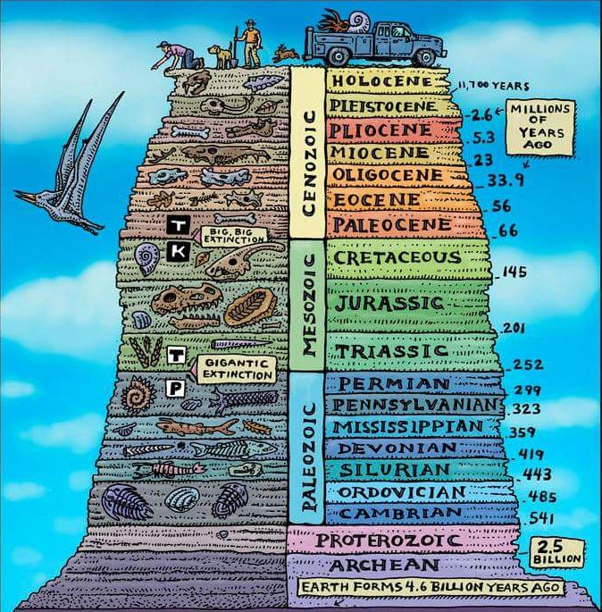 Geology - fossil record